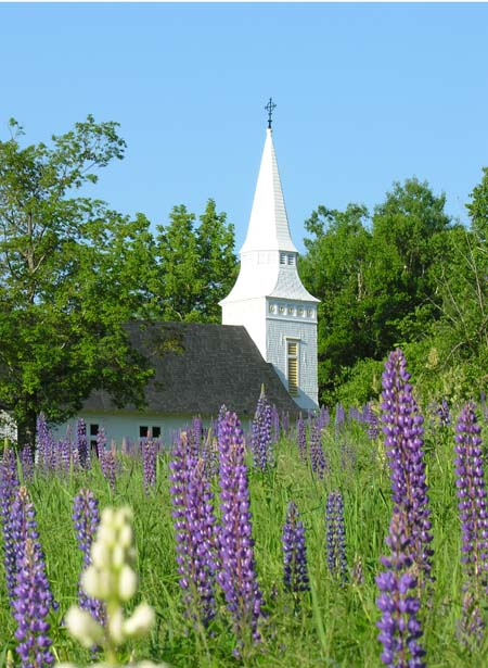 Picture of St. Matthews in June, with lupines in foreground.